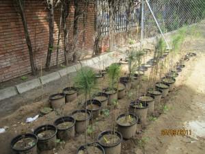Cada árbol ha sido adoptado por dos alumnos